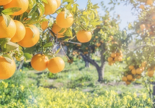 Tree and Its Fruit | Calm Christian Music