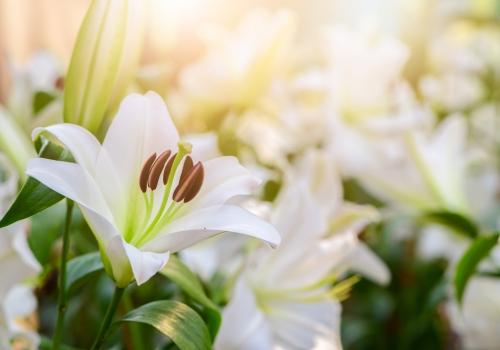 Lilies | Calm Christian Music