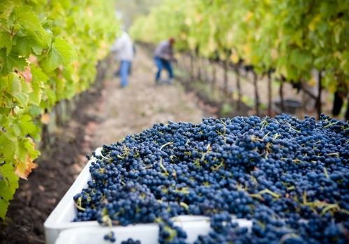 Parable of the Vineyard Workers | Calm Christian Music
